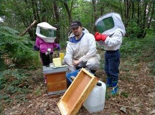 photo de apibee.fr, Frédéric Limouzin